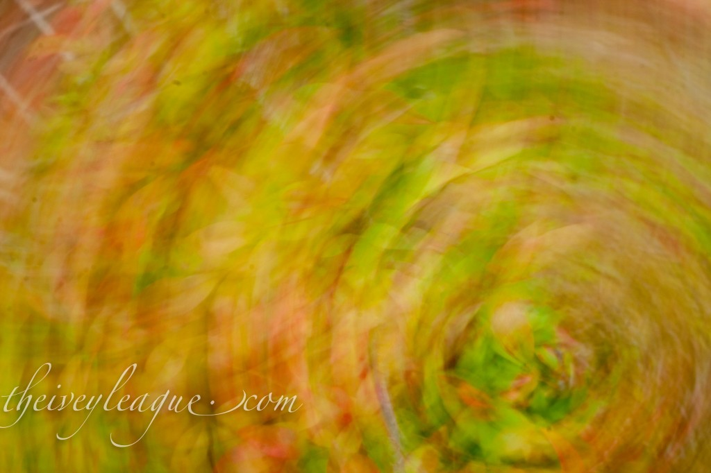 Fall Photography Set2 web 4 1024x682 Spinning