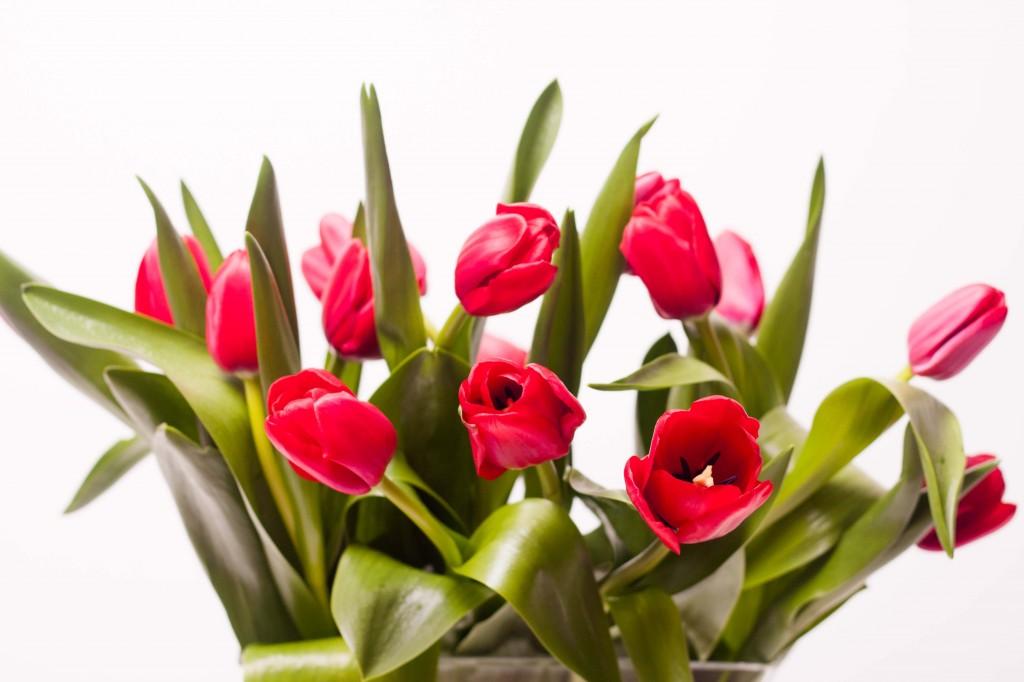 Tulips_web-26