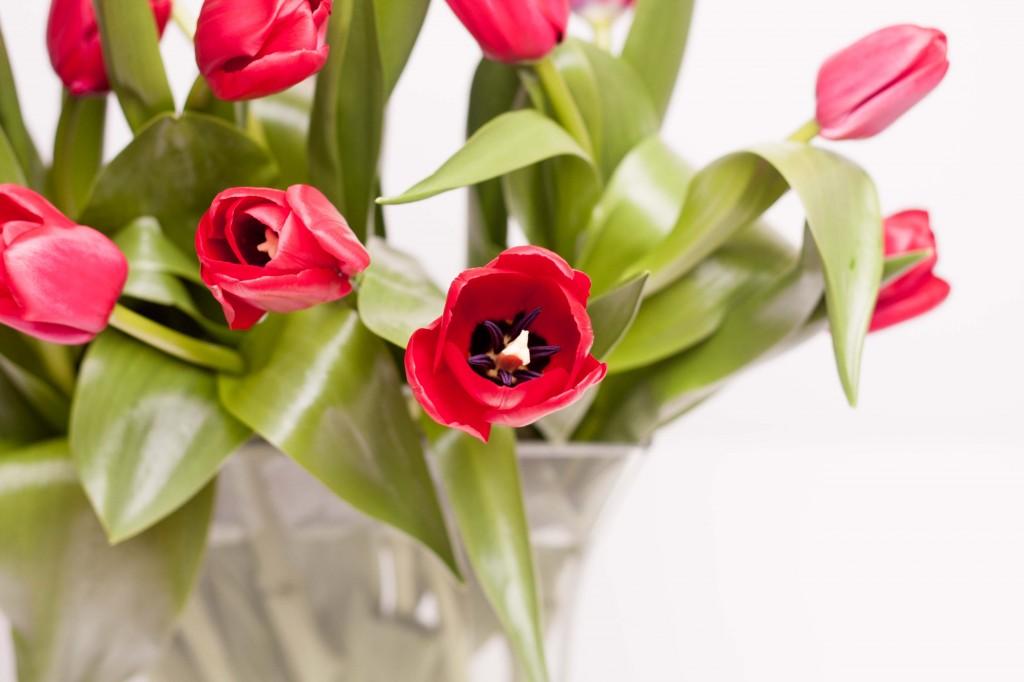 Tulips_web-28