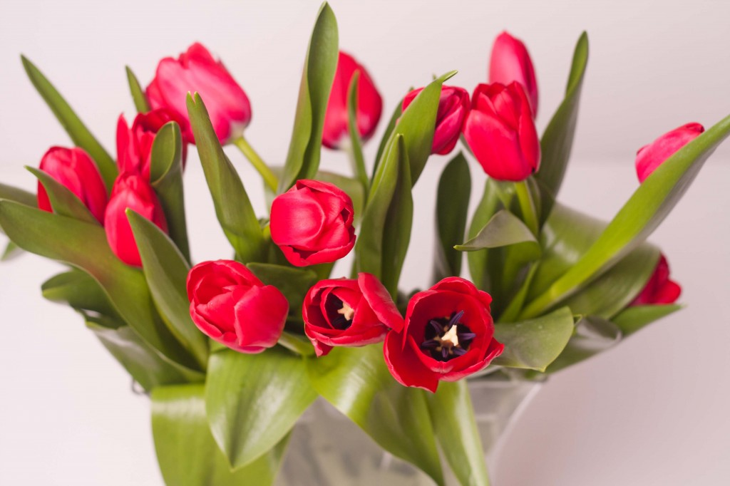 Tulips_web-7